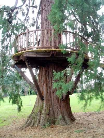Tree deck...