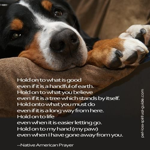 Inspirational Pet Quotes: Pawprints On My Heart ♥