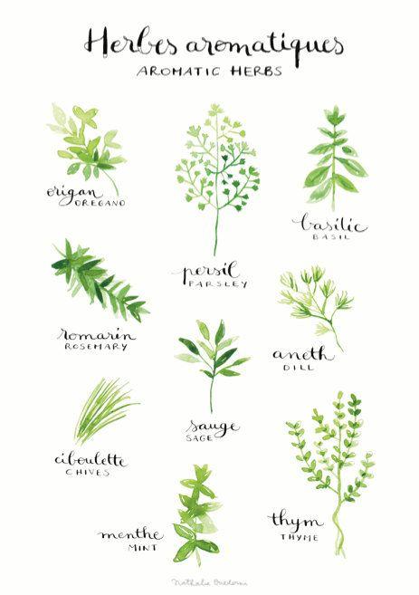 Aquarelle cuisine oeuvre d'herbes aromatiques par NathalieOuederni