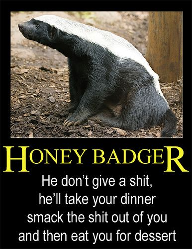 Honey badger dont give a shit - photo#21