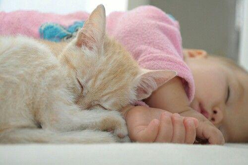Pin By Bushra Rauf On Babies Cat Having Kittens Cat Sleeping