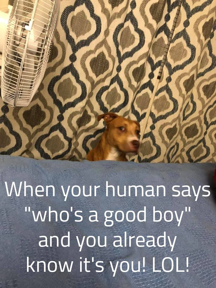 Funny Dog Memes For The Day Lol Http