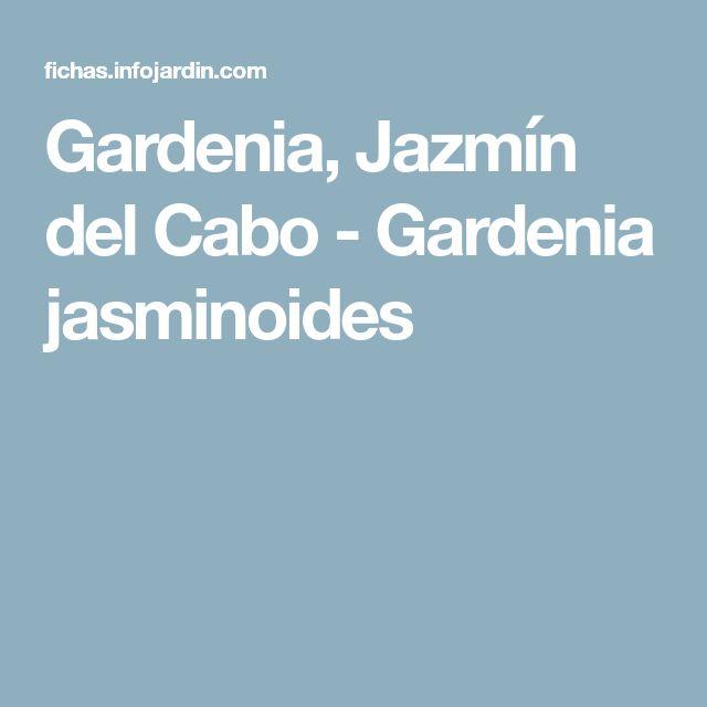 Gardenia, Jazmín del Cabo - Gardenia jasminoides