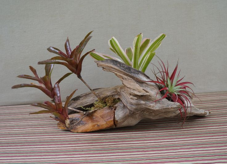 48 best driftwood centerpiece images on pinterest for Driftwood table centerpieces