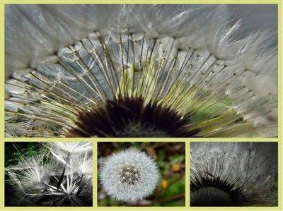 Pattismith's Photos - ViewBug.com - ViewBug.com