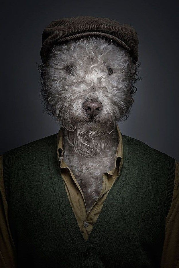 Dogs Dressed as Humans (7 Photos)