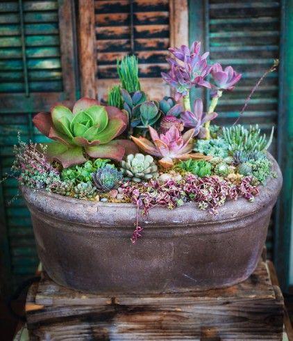 Simply Succulent Plant Designs Los Angeles Orange County - how to design a succulent garden