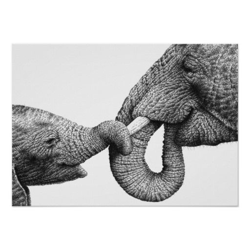 Afrikanischer Elefant-und Kalb-Plakat