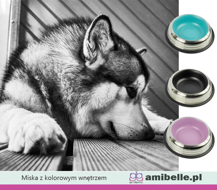 Gdy brakuje Ci czegoś kolorowego. Wyjątkowe miski z kolorowymi wnętrzami. Trzy kolory i trzy rozmiary. Każdy znajdzie swoją ulubioną. www.amibelle.pl#miska #dlapsa #dlakota #nawodę