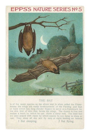 Facts About Bats - Learn about bats through crafts, plays, experiments and observation. Little Brown Bats are endangered. Can we save them http://www.squidoo.com/little-brown-bat