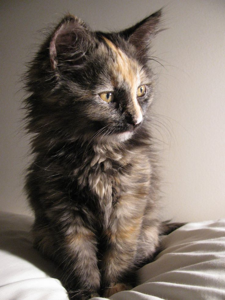 I love calico cats!