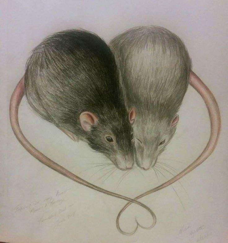 Красивая крыса рисунок