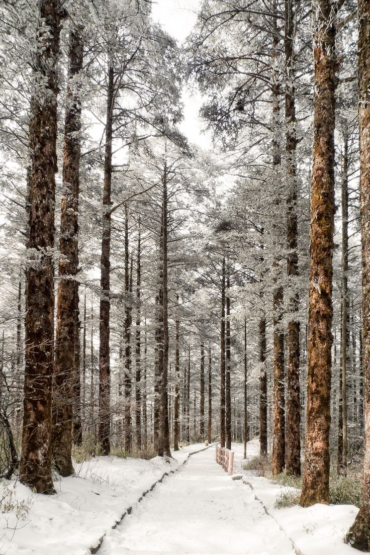 best winter images on pinterest photo poses photo ideas and