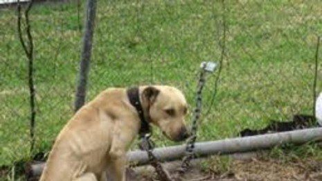 Petition · Board of County Commissioners Catawba County: END the Tethering of Dogs in Catawba County NC · Change.org