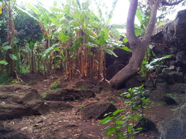 La cueva de los platanos