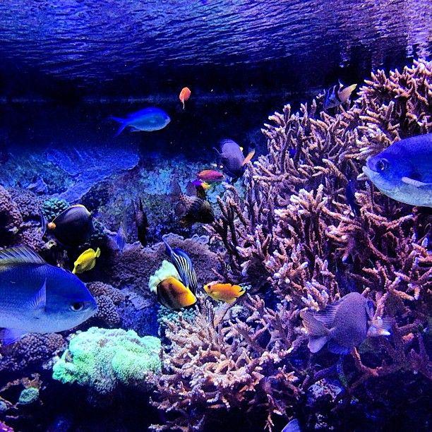 17 Best Images About Houston Aquarium On Pinterest Kid