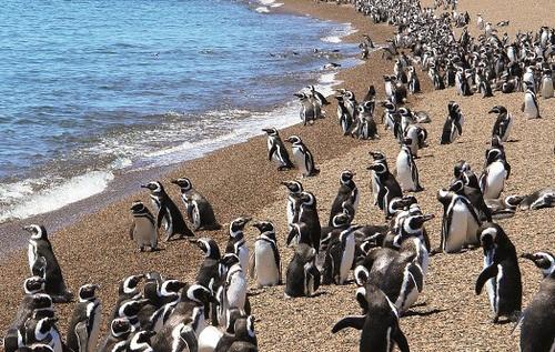 Puerto Madryn - Oad Reizen