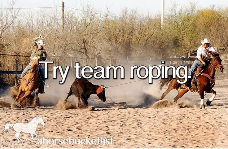 15 Best Team Roping Images On Pinterest Horses Rodeo