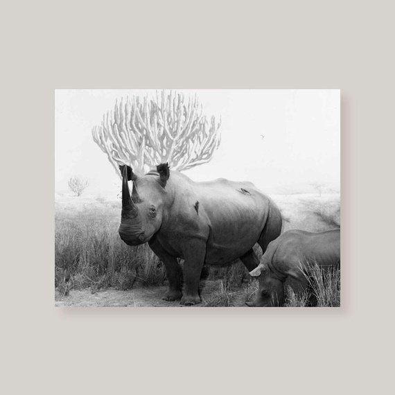 Art print POSTER CANVAS Black Rhinoceros 2