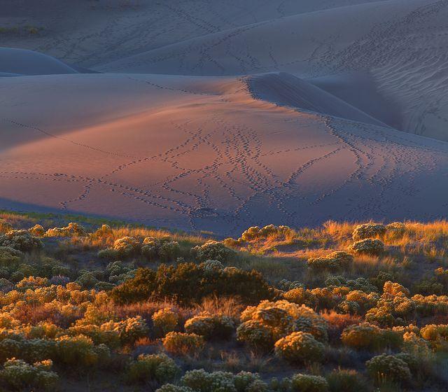 砂丘と灌木(米国・コロラド州)