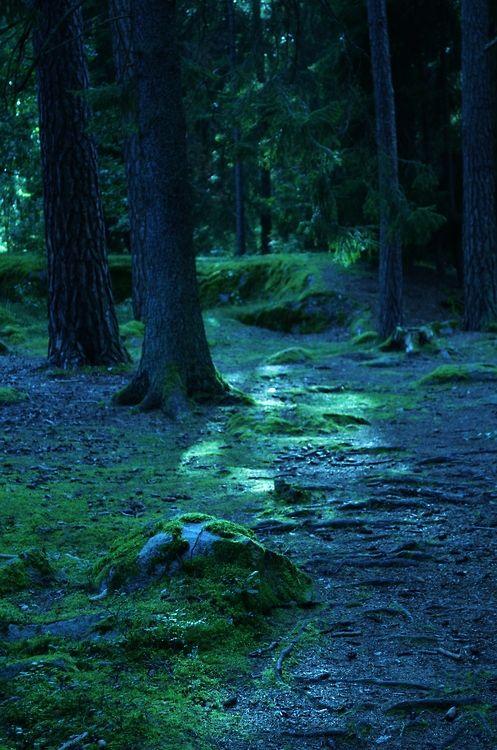 Blue Forest, Linkoping, Sweden  photo via shakira