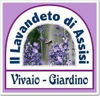 Negozio online prodotti alla lavanda (Il lavandeto di Assisi Vivaio e Giardino della lavanda. Vendita piante aromatiche e prodotti alla lavanda)