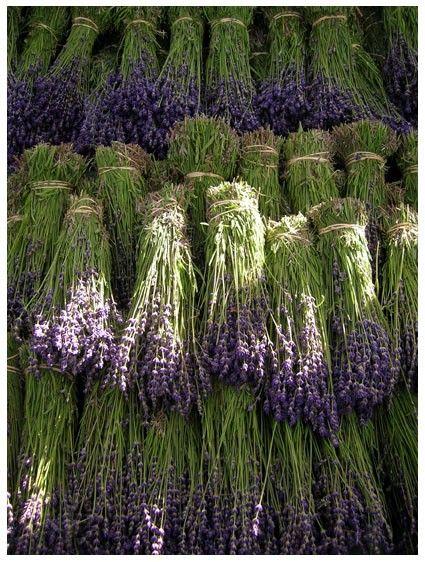 lavender lavender lavender - Gillian uses it to make so many things.: Ideas, Lavender Bundles, Drying Lavender, Dry Lavender, Lavender Lavender, Flowers Marketing, Gardens, Lavender, Natural Living