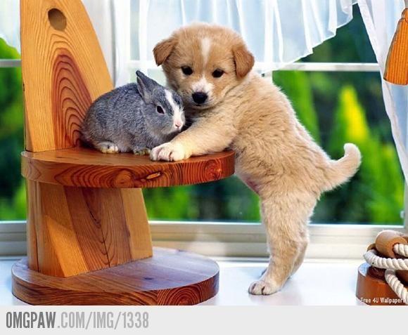 OMGPaw - kleine puppy met kleine konijnen