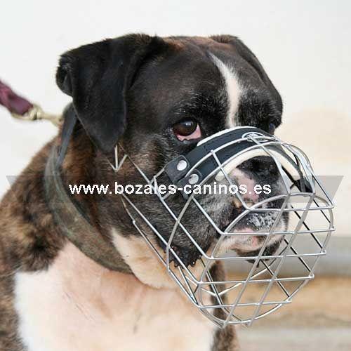 bozal para perro Boxer