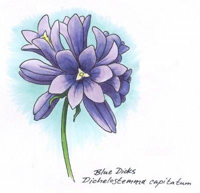 I Like Markers Shading On A Narrow Flower