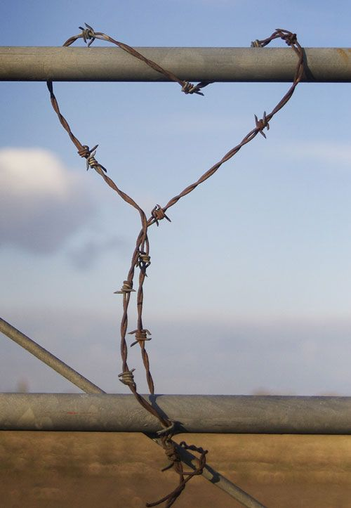 17 best images about Barbed Wired!!! on Pinterest | Farm fencing, By ...