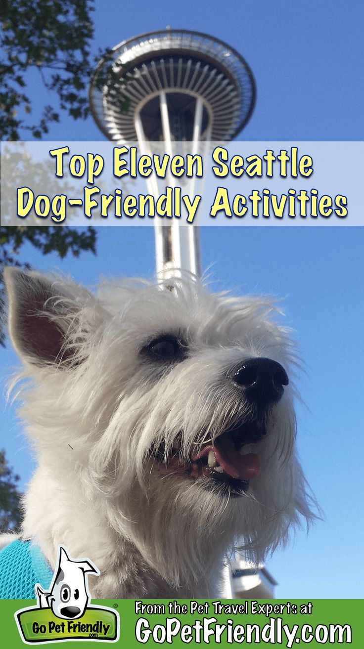 Top 11 Dog Friendly Activities In Seattle Seattle Dog Dog Friends Pet Travel
