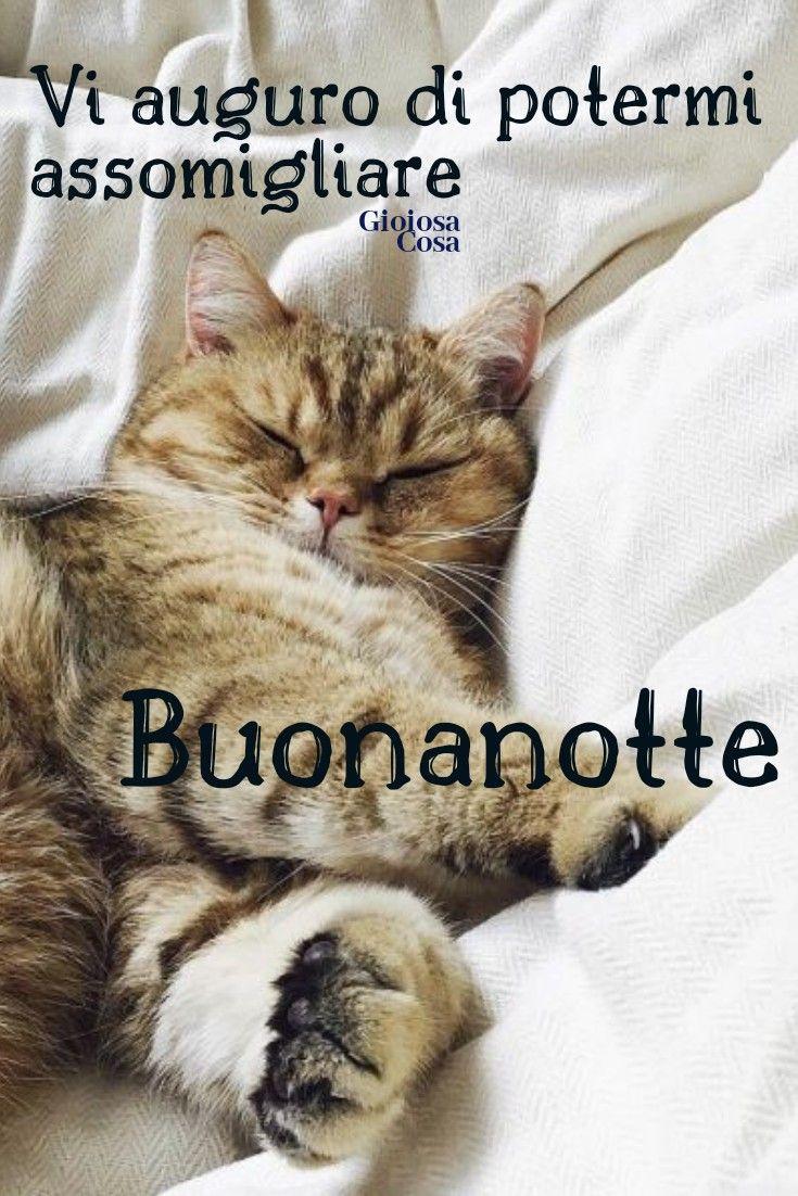 Buonanotte Gattini Dolci Sonno Profondo Che Possiate
