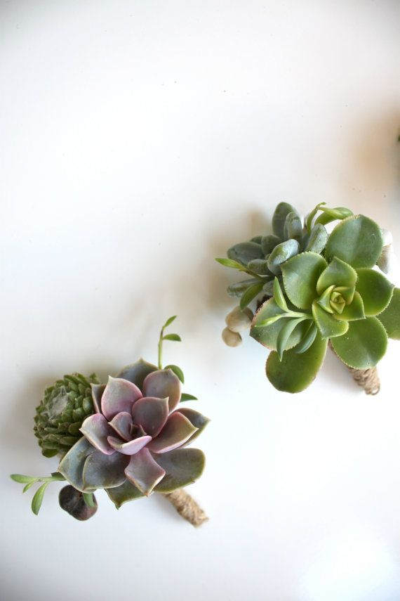 Double Succulent Boutonniere Sets by Eucca on Etsy