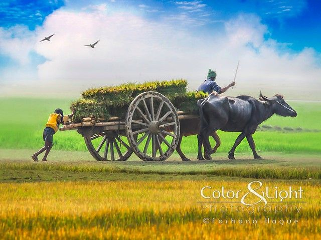 Loads Of Living In 2020 Village Photography Landscape Paintings Indian Art Paintings