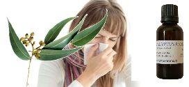 Eucalyptus radié : Epidémie virale et maladies de l'hiver.