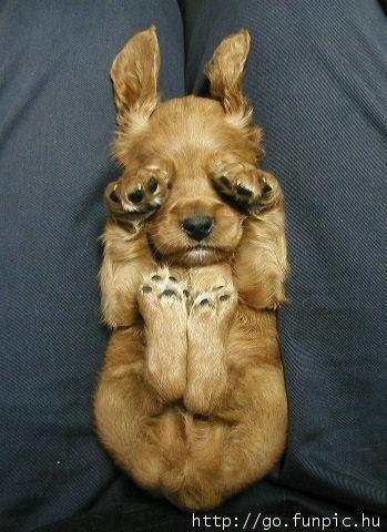 {so sleepy} so cute!: Sleep Dogs, Cute Puppies, Funny Dogs, Little Puppies, So Cute, Sleepy Puppies, Baby Animal, Peekaboo, Peek A Boo