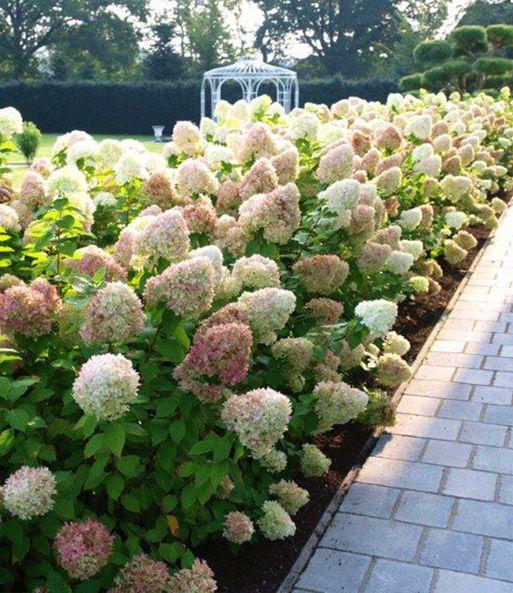 148 best Haus und garten images on Pinterest Flowers, Terrace