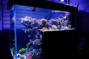 180g drop-off tank - Reef Central Online Community