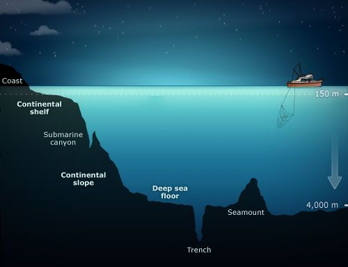 """Diagram from 'te ara"""" showing the continental shelf. In many places around New Zealand the continental shelf is wide, and while relative to the deepest ocean it isn't deep, it appears deep from the human perspective."""