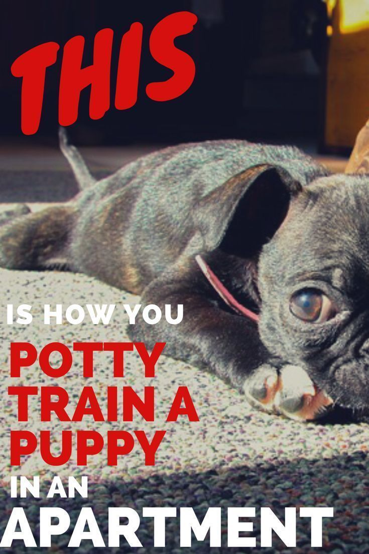 The 5 Secrets To Potty Training A Puppy In An Apartment How To