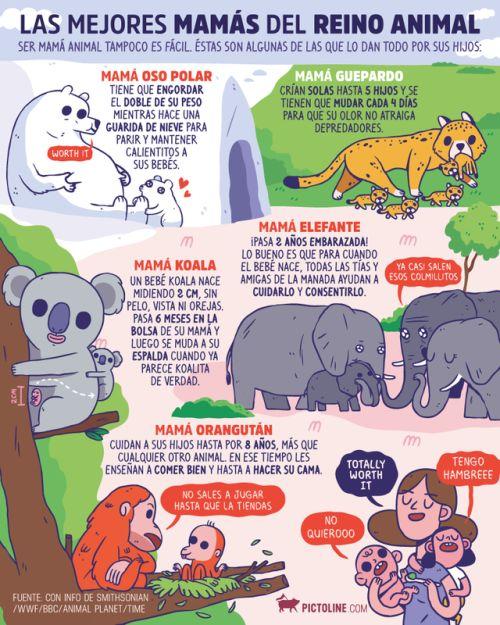 Las mejore mamás del reino animal