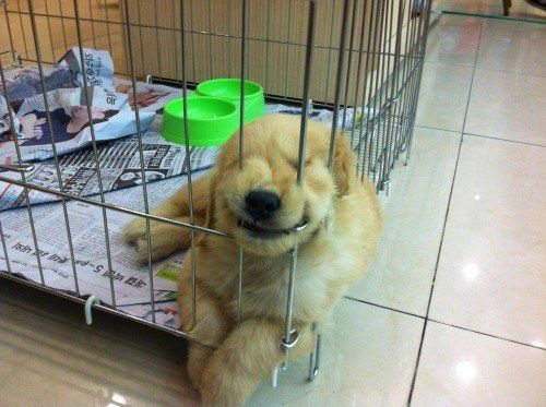 This pup testing the limits of her new metal crate. | 61 Images Of Animals That Are Guaranteed To Make You Smile