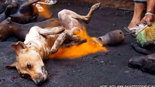 PETITION - Stop trafficking & trading dog meat for consumption. Anjing dan kucing adalah hewan peliharaan dan bukan hewan ternak untuk kepentingan komsumsi.Anjing dan kucing adalah sahabat manusia. Selain untuk menekan angka kriminalitas yang semakin banyak dengan maraknya pencurian anjing dan kucing,kehidupan masyarakat pun juga sangat terancam dengan kejahatan...