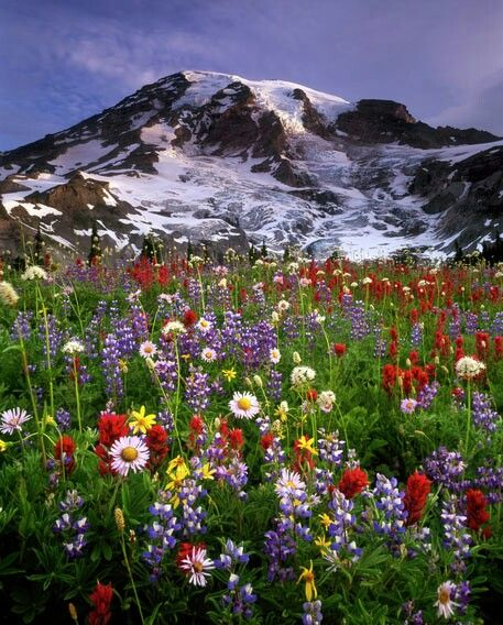 I love the photos of the wild flowers with snow capped mountains standing proudly in the background. These kinds of photos, I think, epitomize America, in a way.