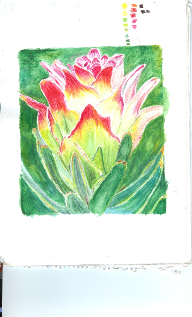 Water colour pencils done in 2010