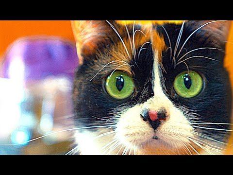 8 cat hacks