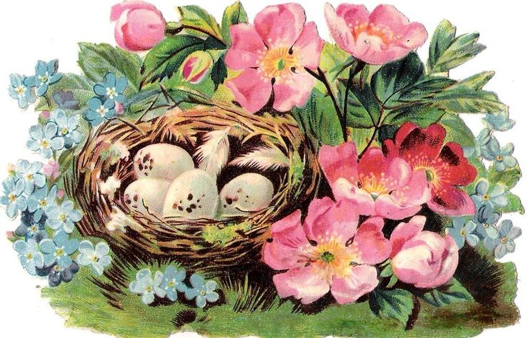 Oblaten Glanzbild scrap die cut chromo Vogel Nest  14,3  Ei egg  Blüte  blossom