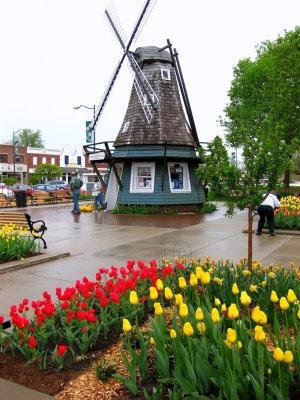 Pella, IA during the tulip festival.