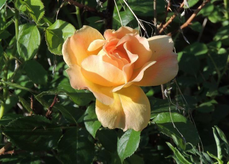 The 10 Best Climbing Roses for Your Yard